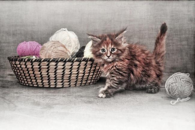 El gat que volia ser sastre