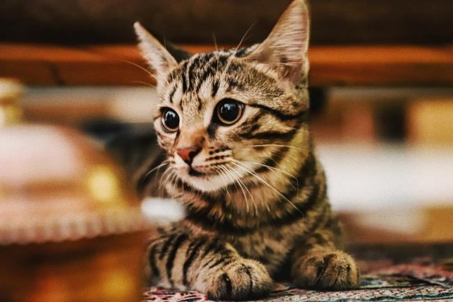 Sindrome del gat volador